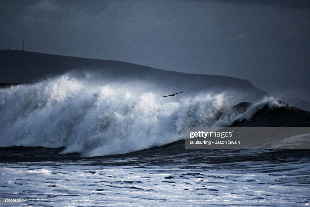 Seagull big wave surfing : Stock Photo