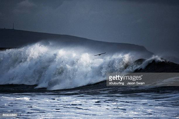 seagull big wave surfing - s0ulsurfing stock pictures, royalty-free photos & images