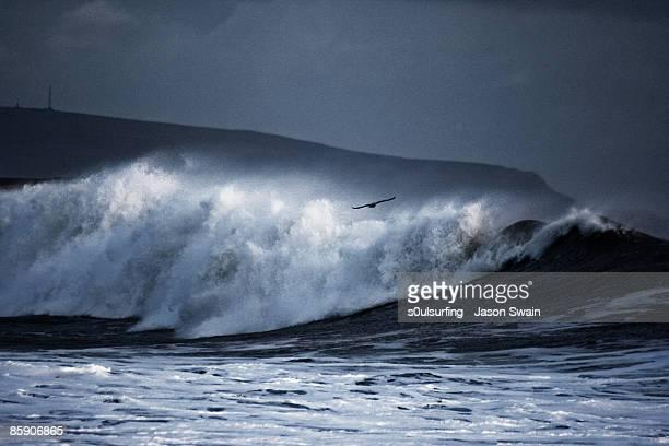 seagull big wave surfing - s0ulsurfing stock-fotos und bilder