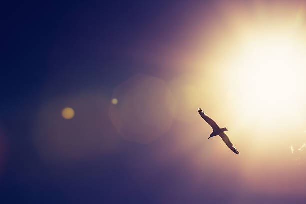 free bird flying in the sky images pictures and royalty free stock