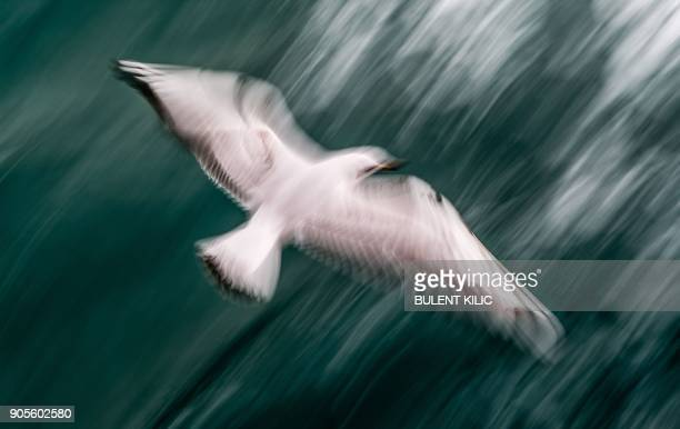 A seagull flies above the Bosphorus off the coast of Istanbul on January 16 2018 / AFP PHOTO / BULENT KILIC