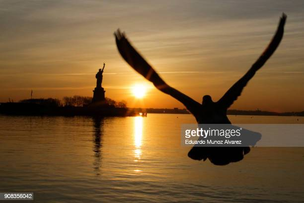 A seagull flies along Hudson river as The Statue of Liberty is seen from Liberty State Park on January 21 2018 in Jersey City New Jersey The iconic...