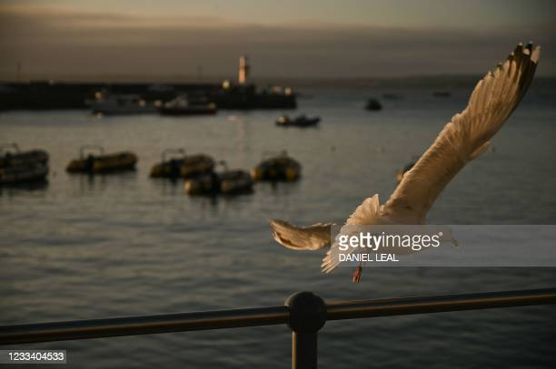 Seagull flies away as the sun rises over St Ives, Cornwall on June 12, 2021 during the G7 summit.