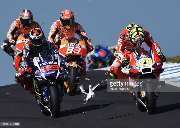 A seagull flies in front of Repsol Honda rider Marc Marquez and Movitar Yamaha rider Jorge Lorenzo of Spain after smashing into Ducati rider Andrea...