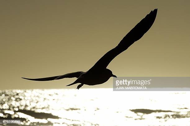 A seagull flies over the beach in La Serena Coquimbo Chile on June 10 2015 AFP PHOTO / JUAN MABROMATA