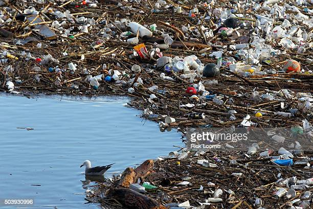 A seagull floats amid tons of trash and debris that has piled up near the mouth of the Los Angeles River after two days of heavy rain fell in...