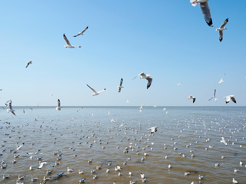 Seagull fly in independent on sea and blue sky view 900727376