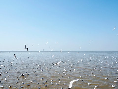 Seagull fly in independent on sea and blue sky view 900727380
