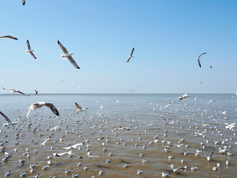 Seagull fly in independent on sea and blue sky view 900727384