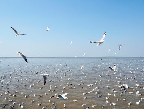 Seagull fly in independent on sea and blue sky view 900727394