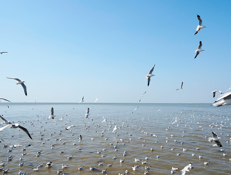 Seagull fly in independent on sea and blue sky view 900727396