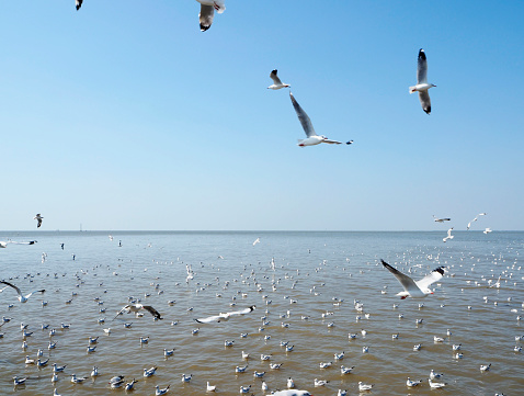 Seagull fly in independent on sea and blue sky view 900727420