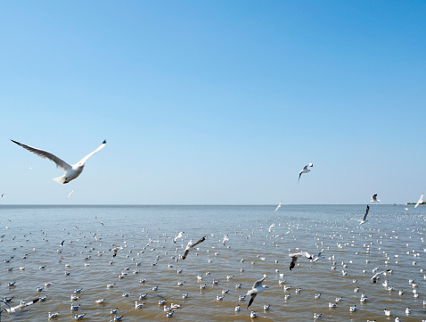 Seagull fly in independent on sea and blue sky view 900727430