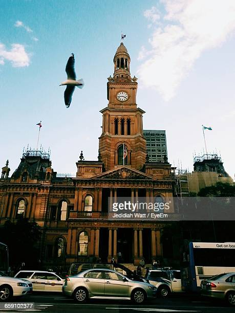 Seagull Flying Above Cars By Sydney Town Hall