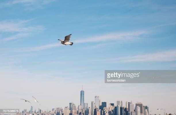 Seagull Flying Against Manhattan Skyline