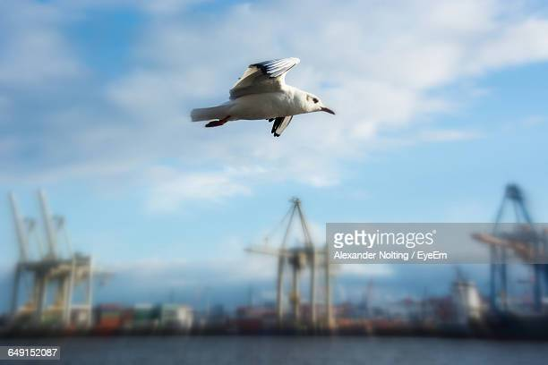 Seagull Flying By Port Of Hamburg Against Sky