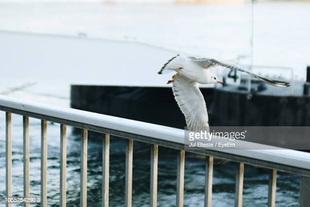 seagull flying by railing at harbor - jul photos et images de collection