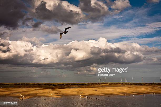 Seagull flying dramatic clouds at seaside town of Wells-next-the-Sea Norfolk sea sand landscape weather wind holidays vacation happy bird