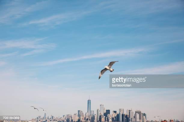 seagull flying over cityscape against sky - bortes stockfoto's en -beelden