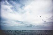 seagull flying over Lake Michigan