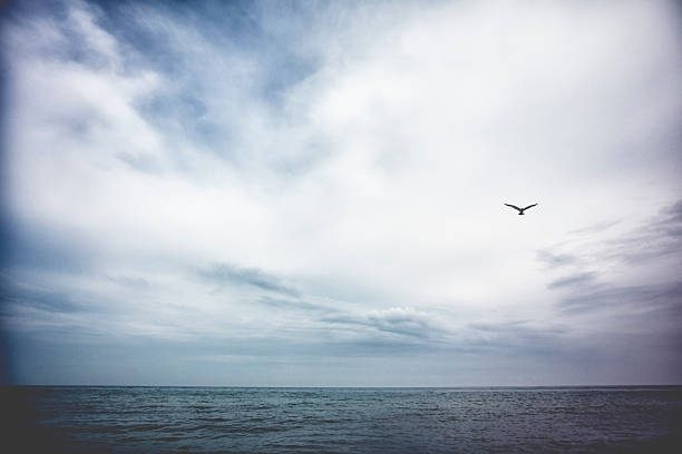 Seagull Flying Over Lake Michigan Wall Art