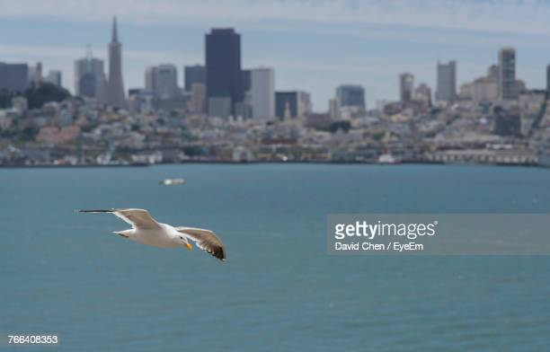 Seagull Flying Over River Against City
