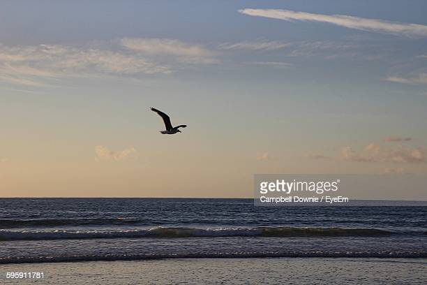 seagull flying over sea against sky - campbell downie stock pictures, royalty-free photos & images