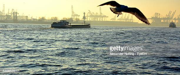seagull flying over sea with ship sailing in background - hafen stock-fotos und bilder