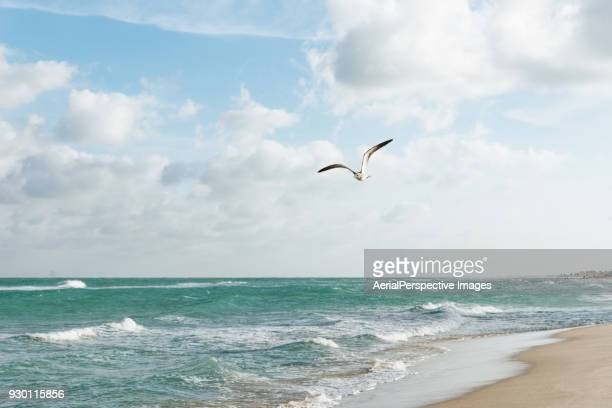 Seagull flying over surf