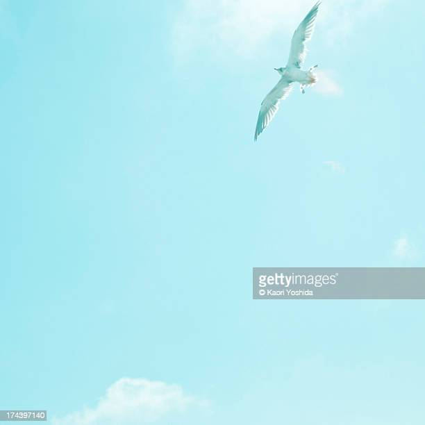 Seagull flying the blue sky