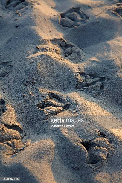 Seagull footprints on the sand