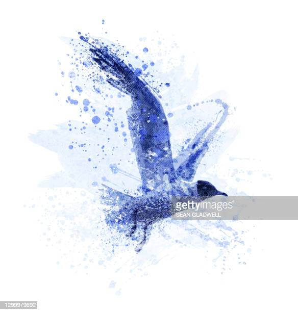 seagull illustration - bird stock pictures, royalty-free photos & images