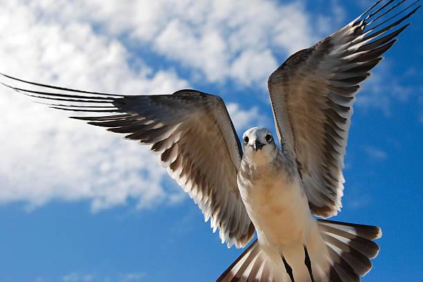 Seagull In Flight Wall Art