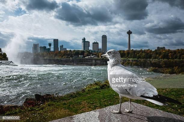 A seagull in Niagara Falls State Park