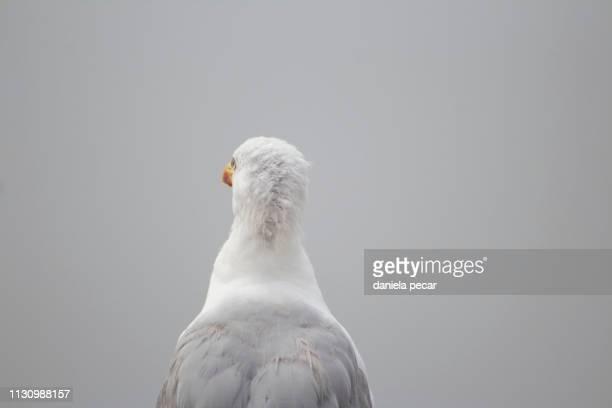 Seagull in the fog