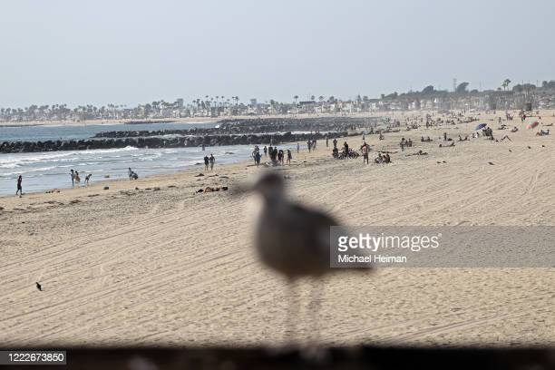 A seagull is seen in front of people gathering on the beach north of Newport Pier on May 3 2020 in Newport Beach California California Gov Gavin...