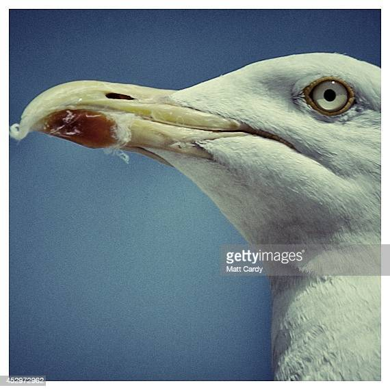 A seagull is seen on July 30 2014 in Weymouth England Figures released by the Met Office show that this July is likely to go down as one of the...