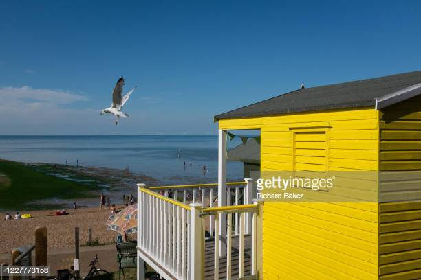 A seagull lifts off from the roof of a beach hut on the seafront promenade at Whitstable on 18th July 2020 in Whitstable Kent England