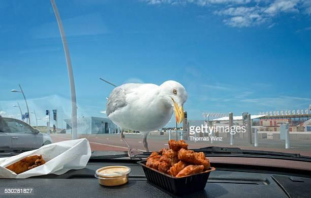 seagull looking at fried fish - benelux stockfoto's en -beelden