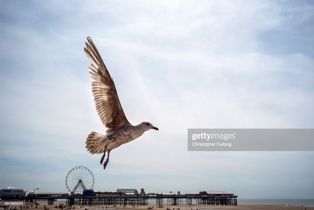A seagull looks for food on Blackpool beach on June 19, 2017 in Blackpool, England. The UK has officially been put on heatwave alert as the Government issued a level three amber heat warning as temperatures are set to increase. In some parts of the Uk temperatures are expected to peak at 34C.