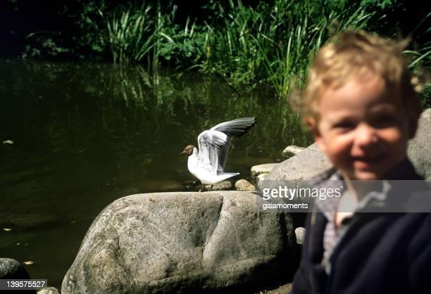 Seagull makes boy happy