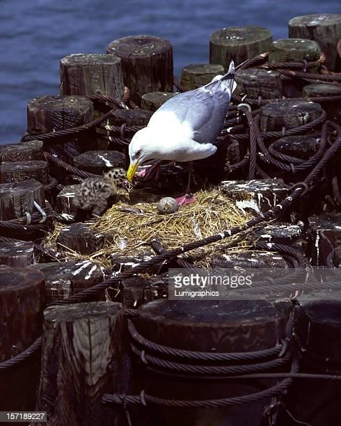 Mouette Nest I