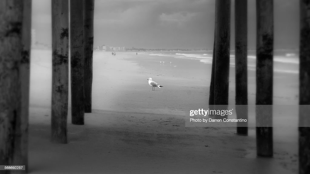 Seagull on a Maine beach : Stock Photo