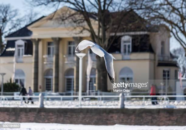 seagull on a snowy beach - travemünde - fotografias e filmes do acervo