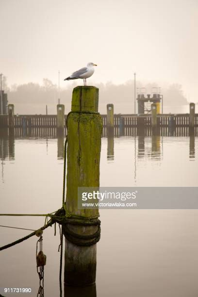 Seagull on a wooden pole in the port of Travemünde, Germany