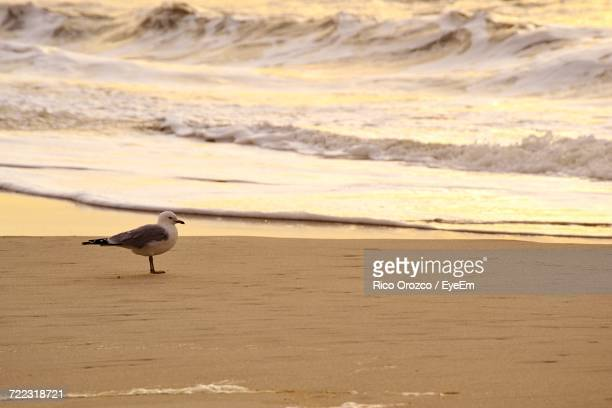 seagull on beach - wantagh stock pictures, royalty-free photos & images