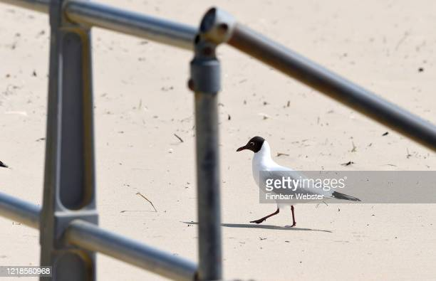 Seagull on Boscombe beach on April 13, 2020 in Bournemouth, United Kingdom. The Coronavirus pandemic has spread to many countries across the world,...