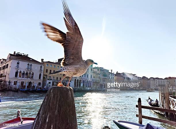 seagull on canal Venice, Italy