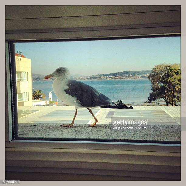 Seagull On Floor Seen Through Glass Window Of House