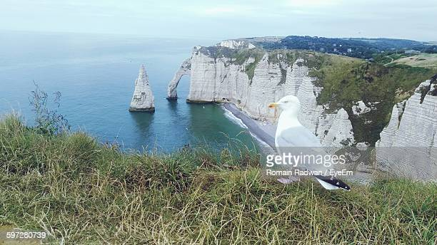 Seagull On Mountain Against Sea At Etretat